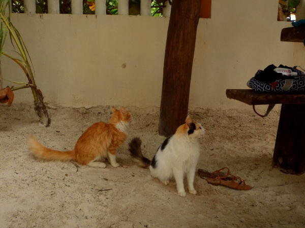 cats of mexico